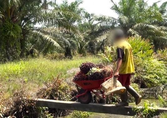 olio-di-palma-bambino-con-carriola