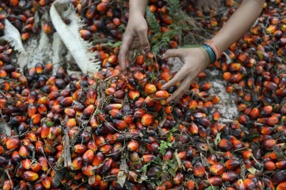 olio-di-palma-foto-a-chiudere-articolo
