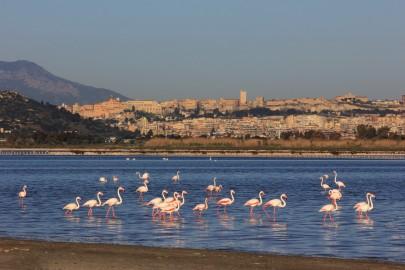 Fenicotteri a Cagliari