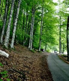 bosco di Corleto