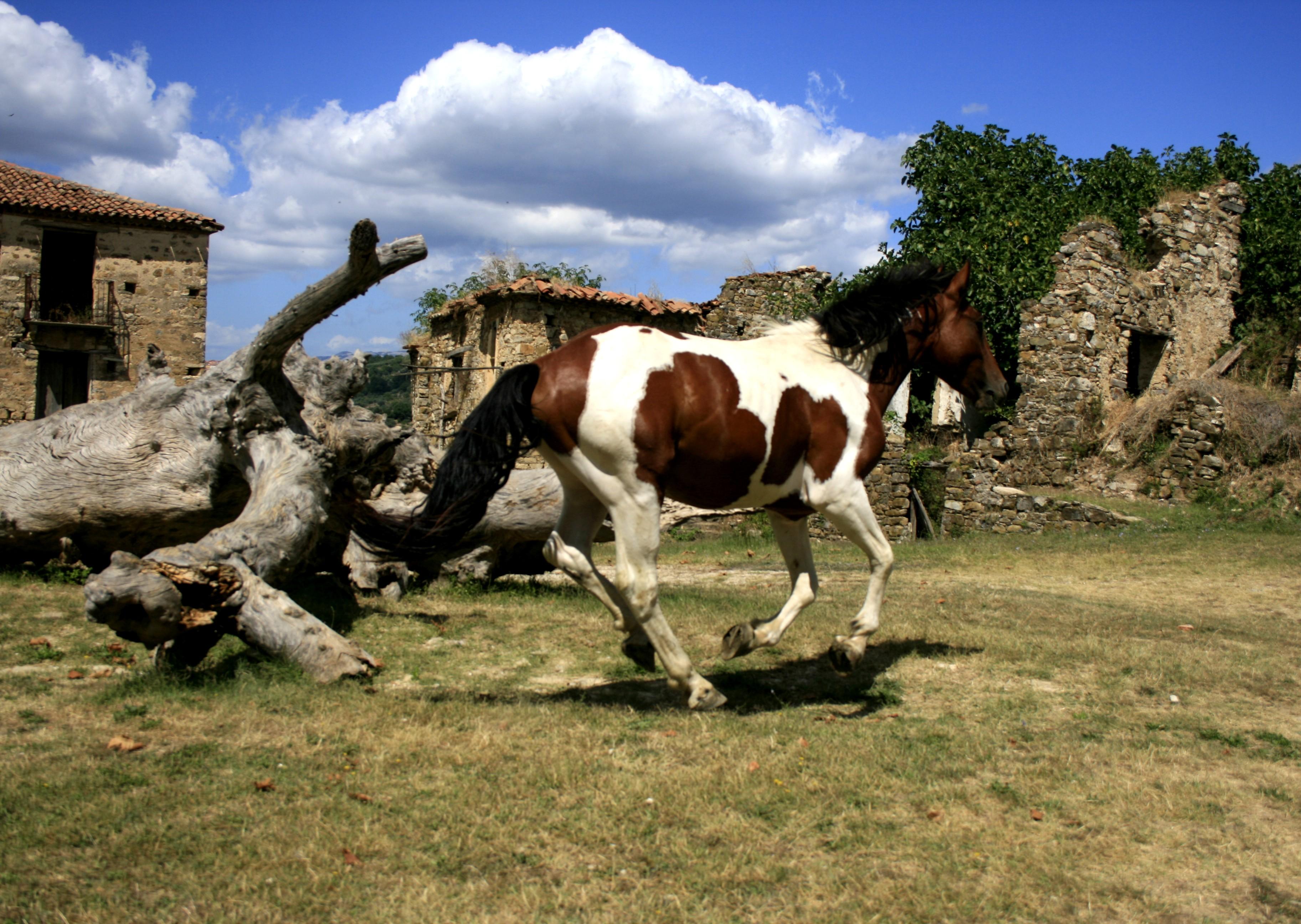 disagio del cavallo argentina en vivo