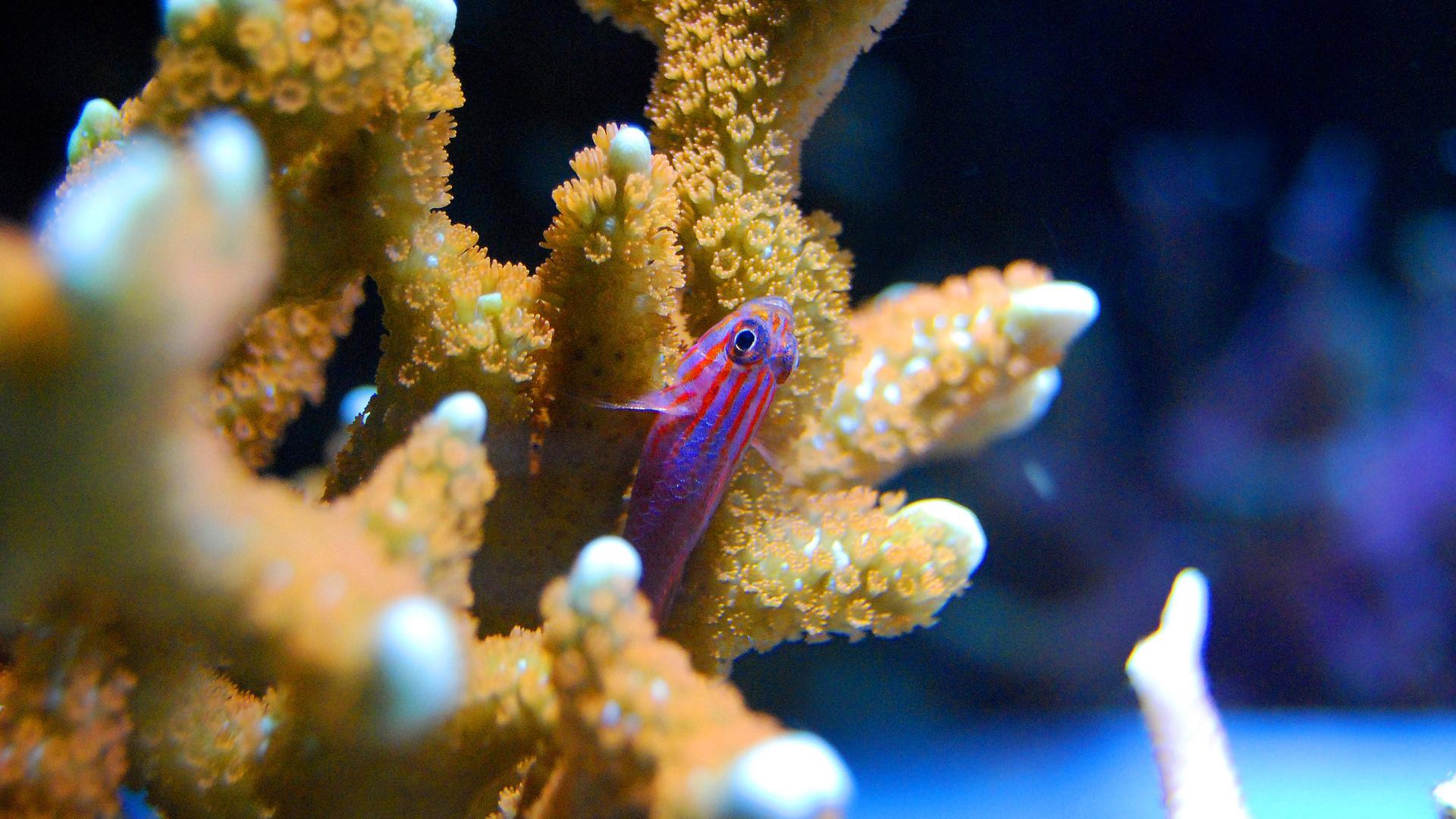Curare i coralli con un cerotto smart. Come funziona?