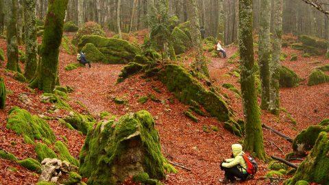 Foreste, conventi e spitualità: i tesori del Casentino