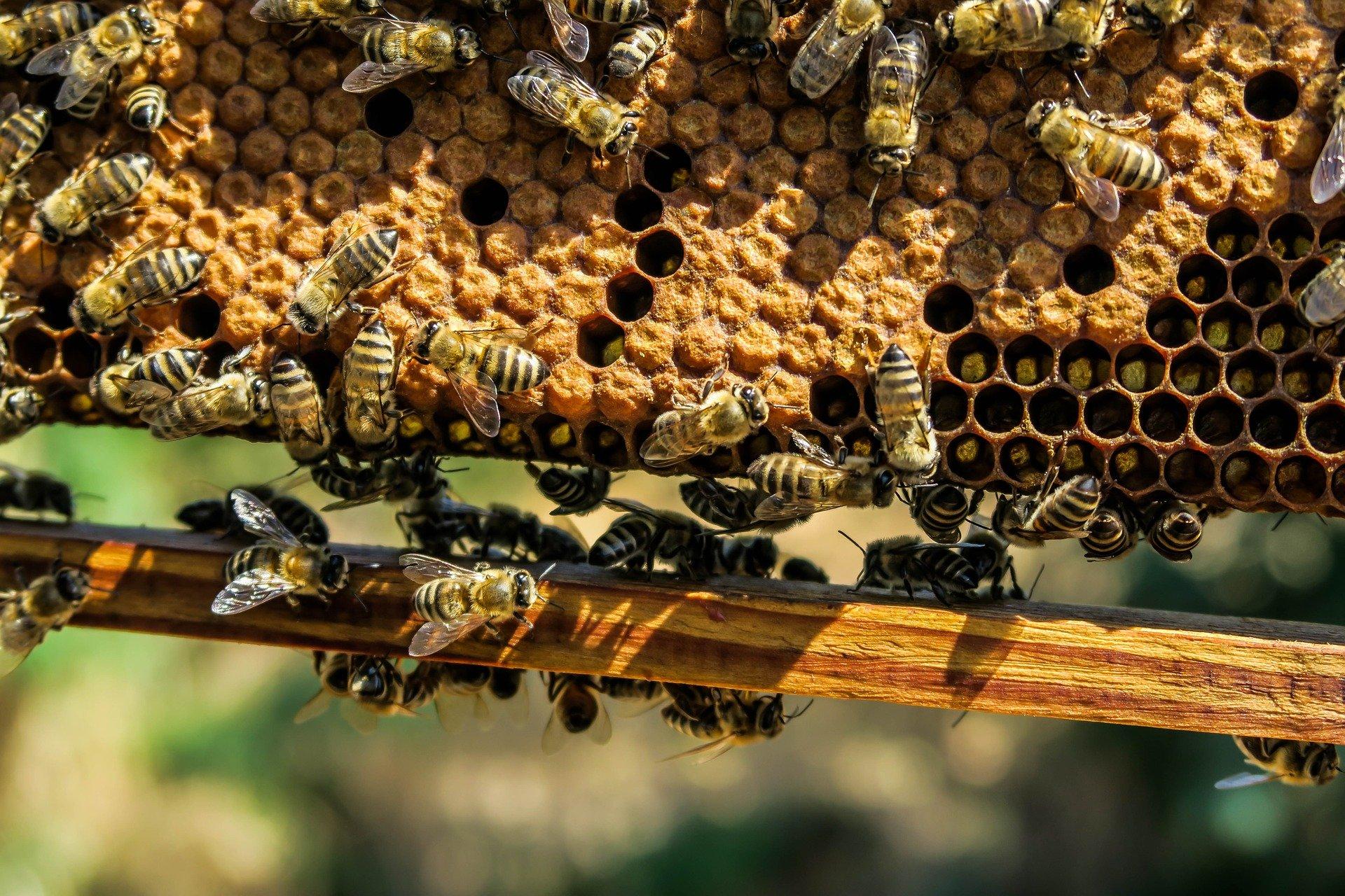 In Francia api a rischio per la reintroduzione di alcuni pesticidi