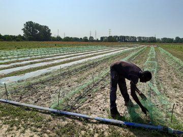 La scommessa di Agrivis, cooperativa sociale agricola di città